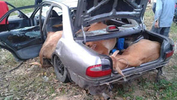 Modified Proton loaded with stolen cows abandoned