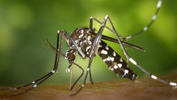 Rise in deaths due to fever, dengue cases in KL - DBKL